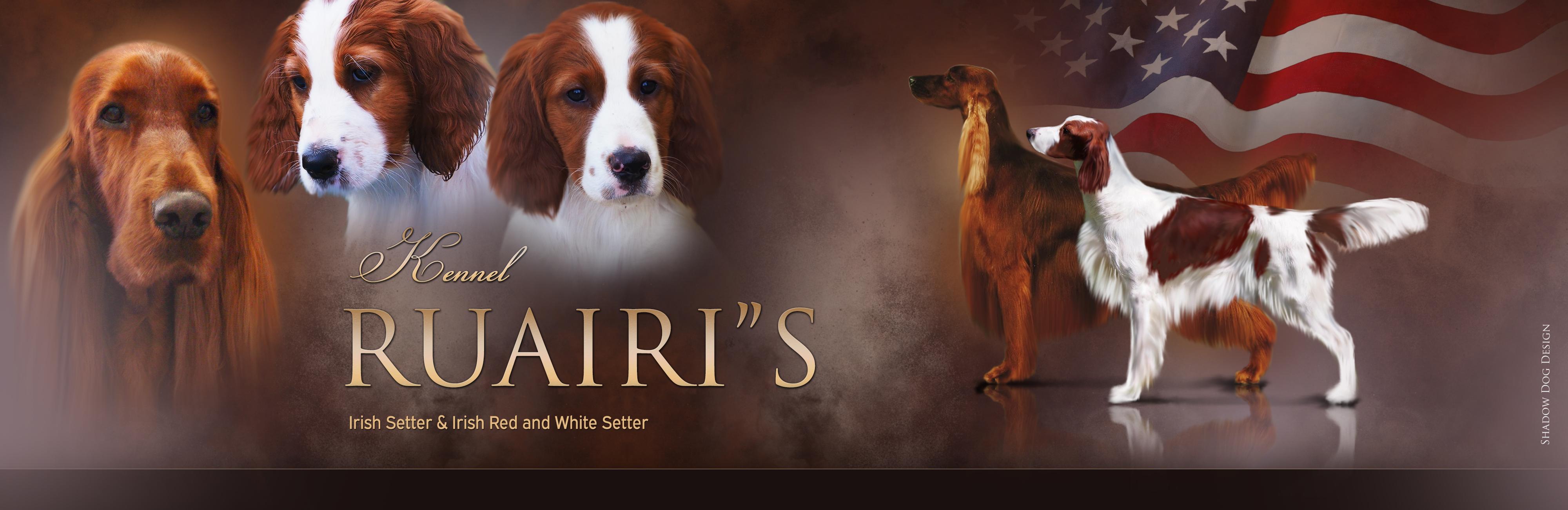 Ruairi's Irish Setter & Irish Red And White Setter